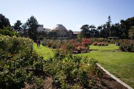 oz native plants best botanical gardens and hidden oases in los angeles