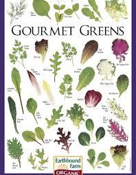 vegetable plant identification chart mehmetcetinsozler com