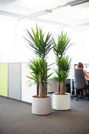 glamorous 25 decorative plants for office design decoration of