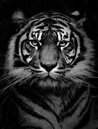 i am a of willard high mascot is the black and white