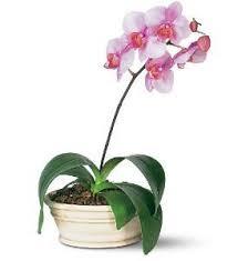 Indoor Flower Plants Indoor Flowering Plants Http Www 1 800 Usflowers Com Flickr