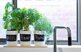 Indoor Herb Garden Ideas by Garden Ideas Zacs Garden