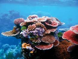 ocean carbon sequestration the world u0027s best bad idea pacific
