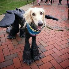 Toothless Dragon Halloween Costume 25 Cosplaying Pets Ready Halloween 2015 Dorkly