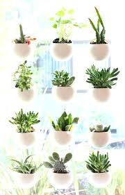 Indoor Hanging Garden Ideas Indoor Garden Apartment Best Indoor Window Garden Ideas On Indoor