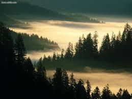 Oregon landscapes images Nature landscapes indian creek siuslaw national forest oregon jpg