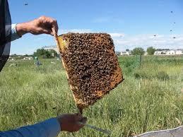 Backyard Beehive Backyard Bee Hive Blog Clean Hive Top Feeder