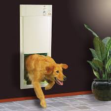 doggy door glass glass door protector from dogs