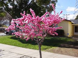 cool trees spring has almost sprung kevin u0027s edible yard