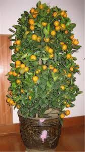 fruit edibles fruit edibles promotion shop for promotional fruit edibles on