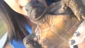 Wrong Hole Turtle Meme - snapchat girl saves tortoise that she thought was a turtle but i