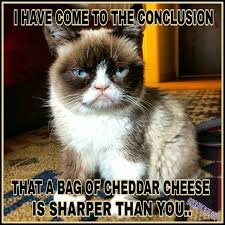 Cool Cat Meme - another grumpy cat meme by the other grumpy kat 2017 not sharper