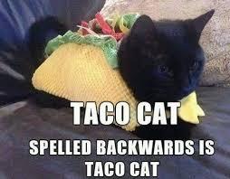 Race Car Meme - too bad taco cat isnt in a racecar meme guy