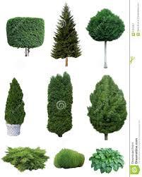 Decorative Shrubs Set Of Trees And Shrubs Stock Photo Image 61912927