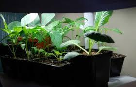 indoor herb garden indoor plants expert