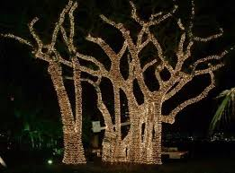 tree lights outdoor home design and decorating