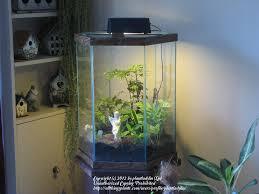 how to turn an aquarium into a terrarium wow garden org