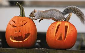 collection halloween squirrel pictures chipmunk halloween card