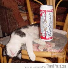 Drunk Cat Meme - catoxication 15 hilarious pictures of cats drinking or drunk