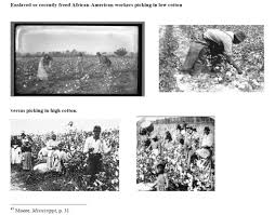 plant breeding not working slaves harder drove cotton