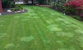 lawn lad landscaper
