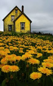 Color Yellow 33 Best Mellow Yellow Images On Pinterest Yellow Color Yellow