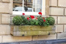 Wooden Window Flower Boxes - wooden window box with red geranium flowers and buxus balls stock