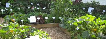pictures small raised bed vegetable garden free home designs photos