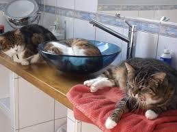 répulsif pour canapé mes chats font leurs griffes sur mon salon en cuir neuf comment