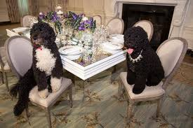 dogs at dinner table michelle obama shares photo of family dogs eating at fine dining