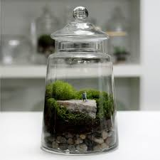 70 best terrarium images on pinterest fairy gardens terraria