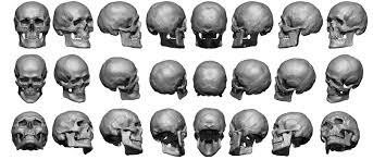3d Head Anatomy Super High Res Skull Sheet Anatomy 360