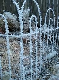winter garden planning crazy green thumbs