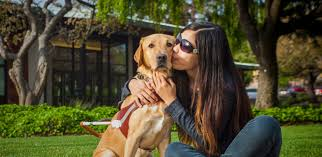 Pictures Of Blind Dogs Guide Dogs For The Blind Welcome To Guide Dogs For The Blind