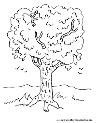 maple tree coloring page create a printout or activity