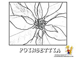 poinsettia coloring pages tales from the traveling art teacher kindergarten poinsettia