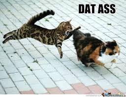 Dat Ass Cat Meme - dat cat ass by herbsmoker meme center
