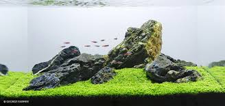 the iwagumi layout an introduction u2022 aquascaping love