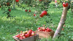 images wallpapers of apple tree in hd quality b scb wallpapers