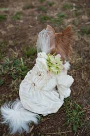 Stone Barn Ranch Wedding 290 Best Pets In Wedding Images On Pinterest Friends Marriage