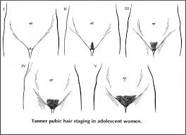 womens pubic hair trends the seven steps needed for putting pubic hairstyles into