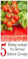 967 best homestead vegetable garden images on pinterest