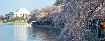 2017 national cherry blossom festival washington dc fairfax