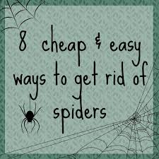 How To Keep Spiders Out Of Your Bed Best 25 Keep Spiders Away Ideas On Pinterest Spider Spray
