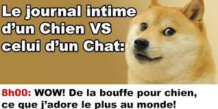Meme Chat - journal intime d un chien vs celui d un chat québec meme