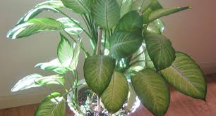 plant low light plants awesome common indoor plants 23 low light