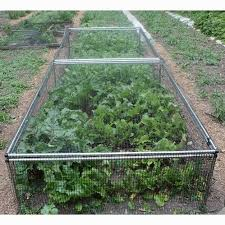 9 best raspberry cages images on pinterest potager garden