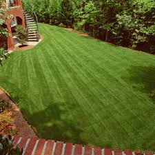 How To Cut Weeds In Backyard Seed Your Lawn How And When To Plant Grass Seed