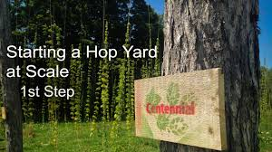 best advice for starting a hop yard youtube