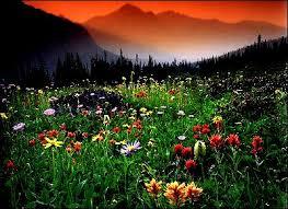 canada flowers flowers in canadian national parks waterton alberta